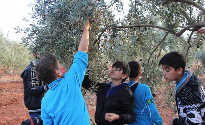Yetim çocuklar barış ve kardeşlik için zeytin topladı