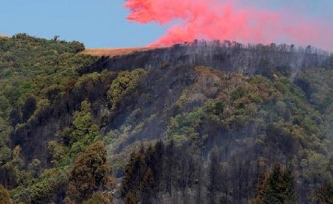 Yeni Zelanda'da son 64 yılın en büyük yangını 3 bin kişi tahliye edildi