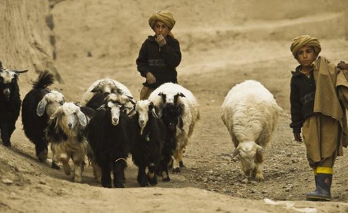 Koyun otlatan çocuklar patlayan bombayla öldü