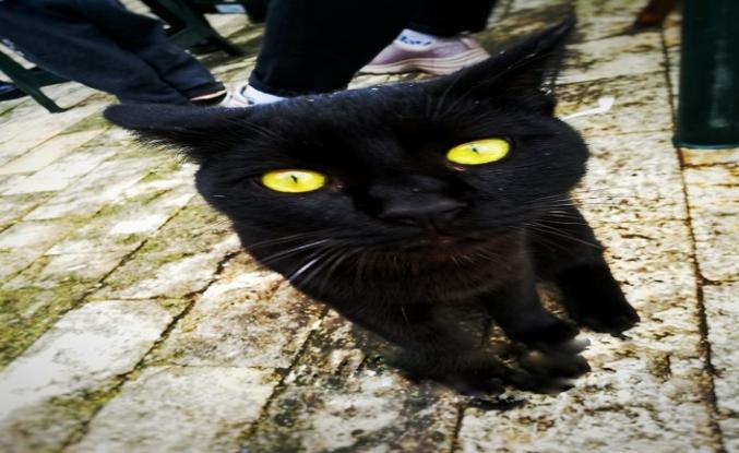 Kara kedilerin günü 27 Ekim