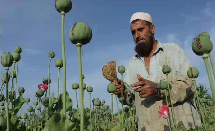 ABD, Afganistan'daki afyon ticaretine saldırıları durdurdu